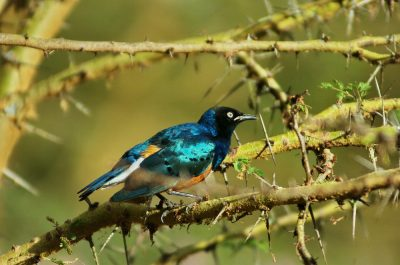 Bird Species In Africa, By Country; Eastern Africa Shines As Bird Paradise
