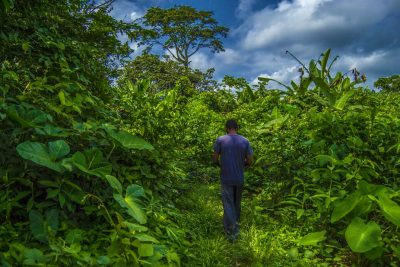 Lessons From Cameroon On Community Forests: Some Successes, Yes, But 78% Have Failed